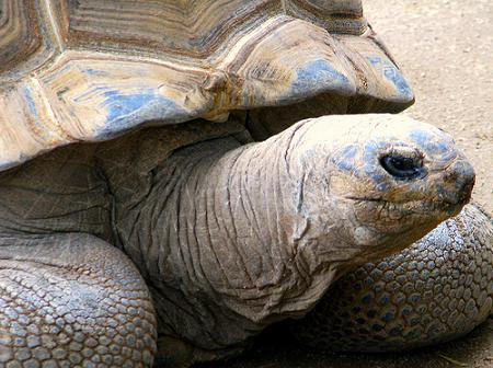 tortoise by Rennett Stowe